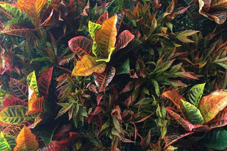 Artificial Greenwall Autumn 01